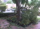 Poor tree!